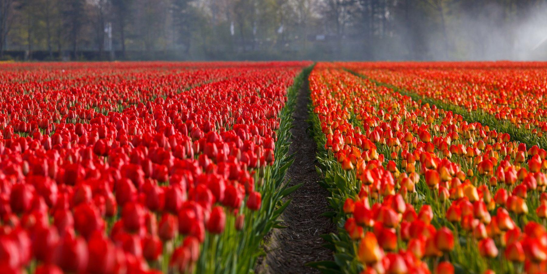 Holland Lederhosen